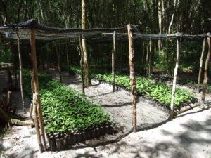 Można kupić sadzonkę i zasadzić, żeby dżungla rosła.